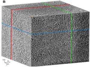 High resolution imaging of PLA microcarrier