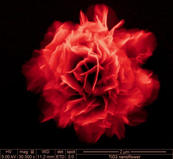 NanoRose_SayariBiswas_NANOART.jpg